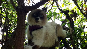 Vaken katt Royaltyfria Bilder