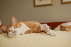 vakna för katt Royaltyfria Bilder