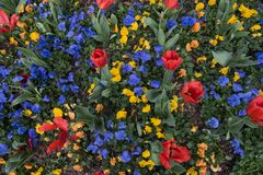 Vakna upp och lukta tulporna! royaltyfri foto