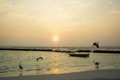 Vakna upp på soluppgång arkivfoton