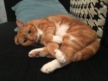 Vaknad katt Arkivfoton