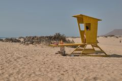 Vaksamt i det gula skjulet som ser havet i stranden av Corralejo, Fuerteventura royaltyfria bilder