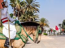 Vakt på hästrygg på Hassan Tower med den marockanska flaggan i Rabat, Marocko Royaltyfri Foto