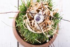 Vaktelägg på gräs Royaltyfria Bilder