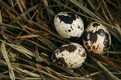 Vaktelägg på höbakgrund Rede med ägg kort easter Arkivbild