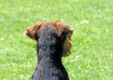 vakthund Arkivfoto