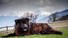 vakthund Fotografering för Bildbyråer