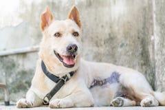 vakthund Royaltyfri Foto