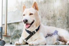 vakthund Royaltyfria Bilder