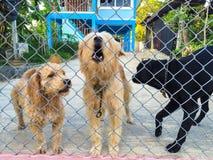 vakthund Royaltyfri Fotografi