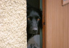 vakthund Royaltyfri Bild