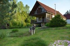 Vakthund på vakten av ett landshus fotografering för bildbyråer