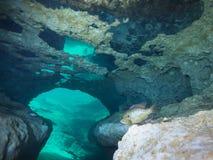 Vaktpost för prickig klumpfisk - Morrison vårar Royaltyfri Fotografi