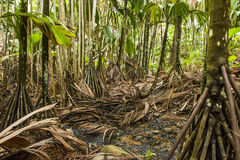 Valée de Mai. Tropical rainforest in Valée de Mai, Seychelles stock image
