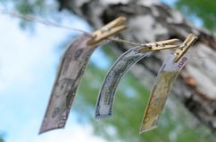 Valörer av dollar och euro på en kabel på pinnor Arkivfoton