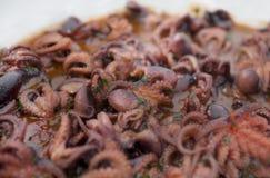 Val av den lilla bläckfisken för italiensk anti-pasti Fotografering för Bildbyråer