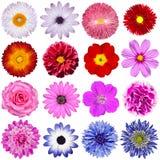 Val av olika blommor som isoleras på White Royaltyfri Fotografi