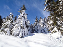 Val Blenio. snowy path Stock Photos