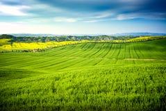 Val D ` Arbia, Toscanië, Italië Heuvels met tarwe en canola, met zijn gele bloemen worden gecultiveerd die Met achtergrond Kreta  Stock Foto