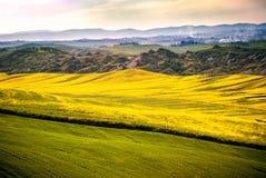 Val D ` Arbia, Toscanië, Italië Heuvels met tarwe en canola, met zijn gele bloemen worden gecultiveerd die Met achtergrond Kreta  royalty-vrije stock afbeeldingen