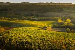 VAL D ` ORCIA, TUSCANY/ITALY -葡萄园在Val d ` Orcia 免版税库存照片