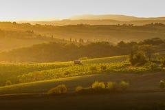 VAL D ` ORCIA, TUSCANY/ITALY -葡萄园在Val d ` Orcia 免版税库存图片