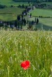 Val d& x27 Orcia, Σιένα, Τοσκάνη, Ιταλία - εξόρμηση στο ποδήλατο βουνών Στοκ Εικόνα