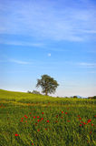 Val d'Orcia. Landscape of Val d'Orcia, Siena, Tuscany, Italy Royalty Free Stock Images