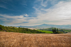 Val d'Orcia. Wheat fields in Val d'Orcia, Tuscany, Italy Royalty Free Stock Photos