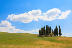 Val d'Orcia cypresses view. VAL D'ORCIA, ITALY - JUNE 06, 2017: Val d'Orcia cypresses view, Chianti, Tuscany Stock Photos