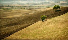 Val d ` Orcia, jest regionem Tuscany, z delikatnymi wzgórzami kultywującymi głownie z ce obraz stock