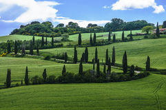 Val d'Orcia landscape Royalty Free Stock Image