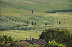 Val d'Orcia in Tuscany Royalty Free Stock Photo