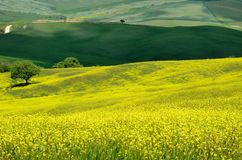 Val d'Orcia (Tuscany) Stock Photography