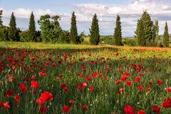 VAL D'ORCIA TUSCANY/ITALY - 19 DE MAIO: Campo da papoila em Toscânia em M Fotos de Stock