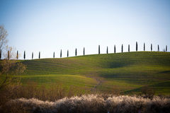 Val d'Orcia in Tuscany, Italy Stock Photography