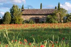 VAL D'ORCIA TUSCANY/ITALY - 19 MAGGIO: Campo del papavero in Toscana sulla m. fotografie stock libere da diritti