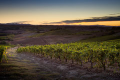 VAL D`ORCIA, TUSCANY/ITALY - Vineyard in Val d`Orcia Royalty Free Stock Images