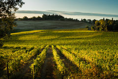 VAL d ` ORCIA, TUSCANY/ITALY - winnica w Val d ` Orcia obrazy stock
