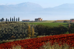 Val D'Orcia. View Of Val D'Orcia Tuscany, Italy Royalty Free Stock Image