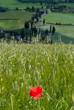 Val d'Orcia, Siena, Tuscany, Italy - Excursion in Mountain Bike Stock Image
