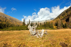 Val di Fumo - Adamello Trento Italië Royalty-vrije Stock Fotografie