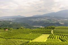 Val di Non (Trento) Stock Images
