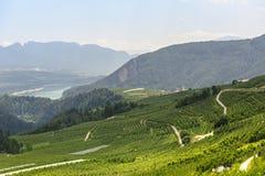 Val di Non (Trento) стоковые изображения