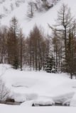 Val Frettchenreise stockbild