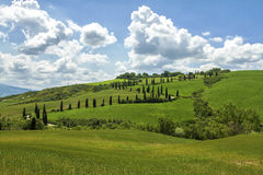 Val Orcia. Street in Val orcia tuscany Royalty Free Stock Photo