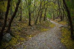 Val Rosandra Forest fotografia stock