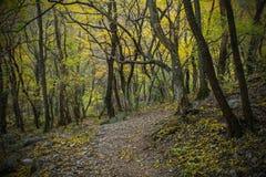 Val Rosandra Forest arkivfoto
