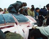Val som fångas av Chukchi som klipper valkadavret arkivfoton