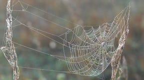 val, strik, haak, valkuil, vangst, spinneweb geweven Web van spid stock illustratie